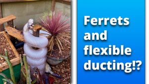 Ferrets and flexible ducting place holder